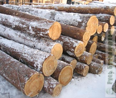 Winter wood of high quality